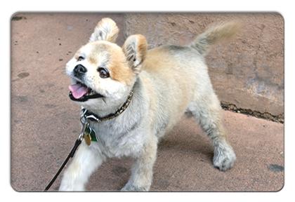 FC2_Santabe Dog