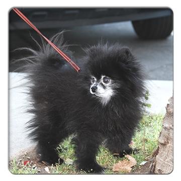 FC2_Balboa dog