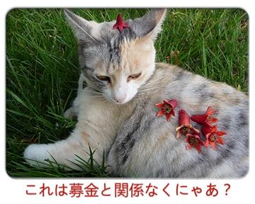 FC2_Mar03212011.jpg