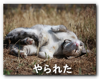 FC2_Shaka2011_4.jpg
