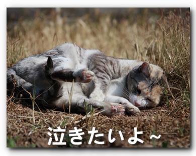 FC2_Shaka2011_5.jpg