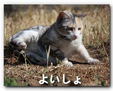 FC2_Shaka2011_6.jpg