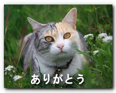 FC2_Shaka2011_8.jpg