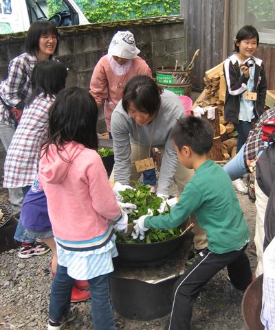 山茶摘み体験2010年100606b