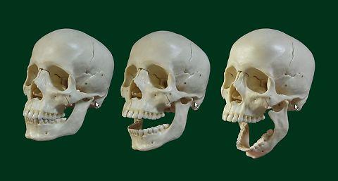 開口に伴う顎関節の動き