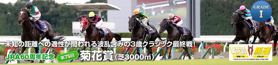第75回 菊花賞 01