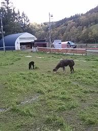 20alpaca farm