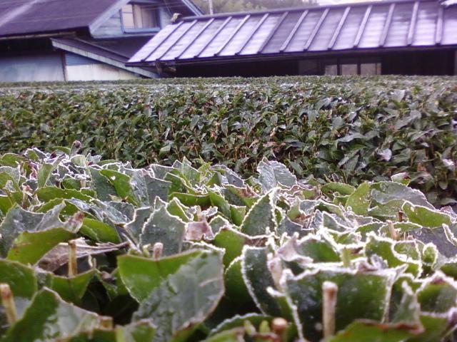 2011初霜