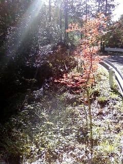 2011-12-04植樹木№(024)