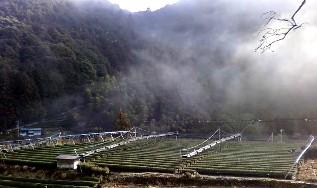2011-02-25棚 宇山№(001)