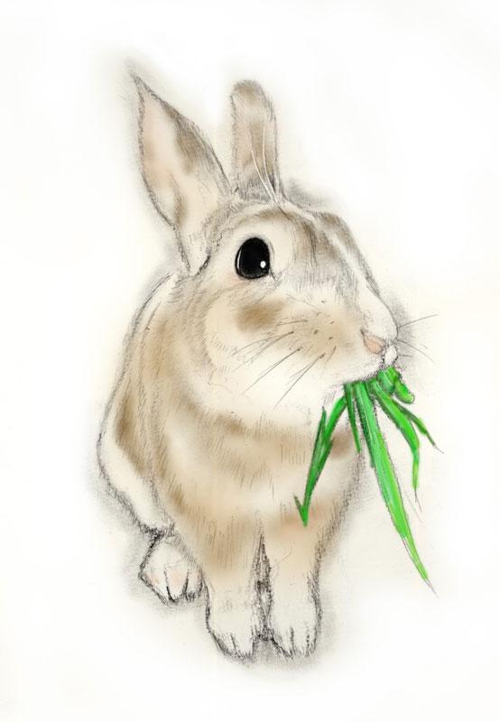 干支のウサギ