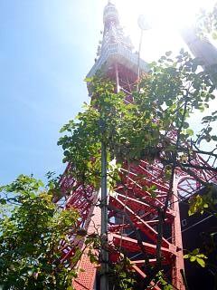 東京タワー(その4)