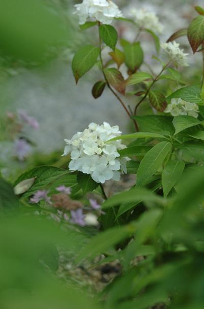 benitsuru2010602.jpg