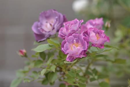 blueforyou2011519-1.jpg