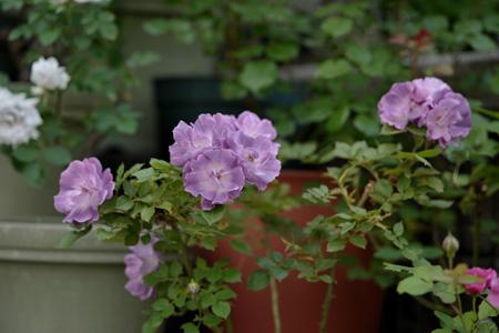 blueforyou2011522.jpg
