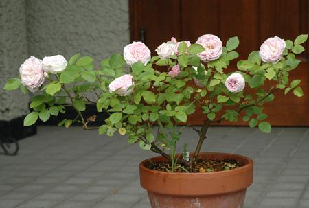 china2011522-4.jpg