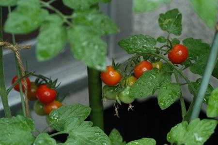 fruitsmini2010703.jpg