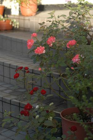 jardinsdefrance2010721.jpg