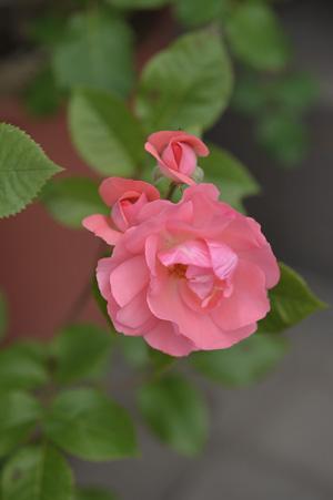 jardinsdefrance2011521-1.jpg