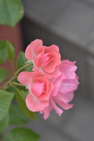 jardinsdefrance2011522-1.jpg