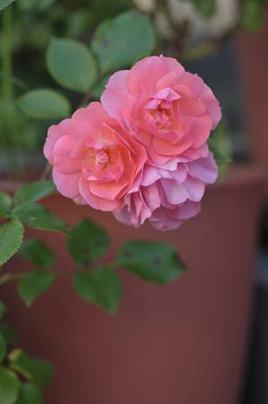jardinsdefrance2011523-1.jpg