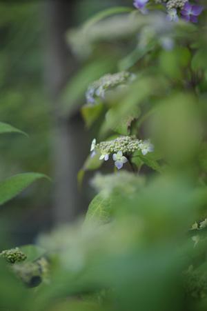 kurohime2011523-4.jpg