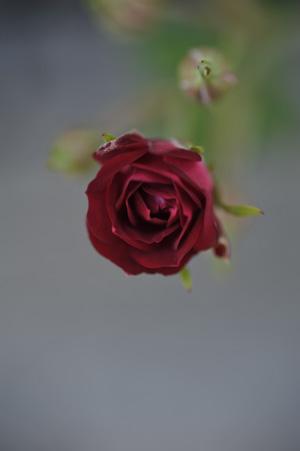 redcascade2011524-1.jpg