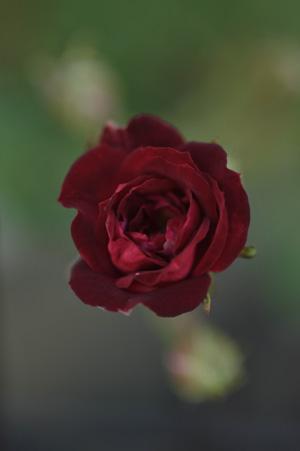 redcascade2011524-2.jpg