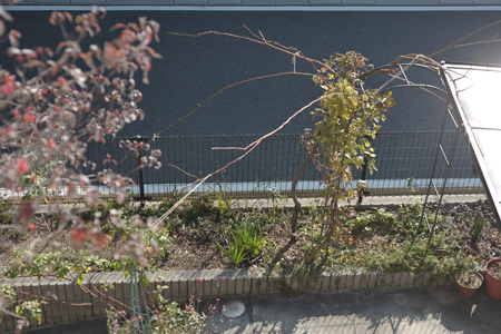 rose20131205-1.jpg