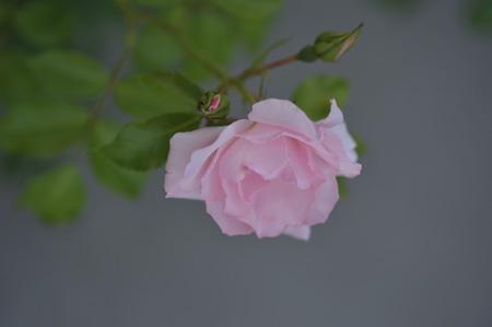 rosendolf2011525-2.jpg