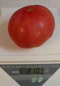 tomato2006717.jpg