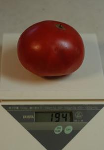 tomato2010703-1.jpg