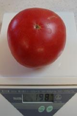 tomato2010714.jpg