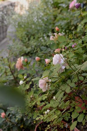 zenkei2011518-11.jpg