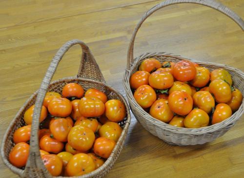 教会で獲れた柿