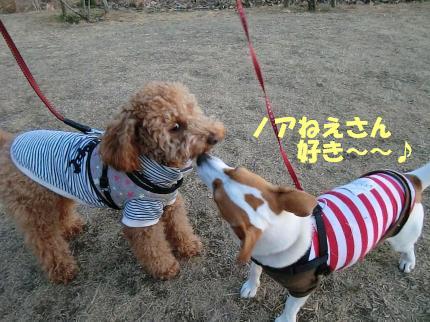はのちゃんキス