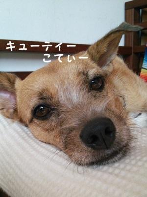 ◆DSC_0131