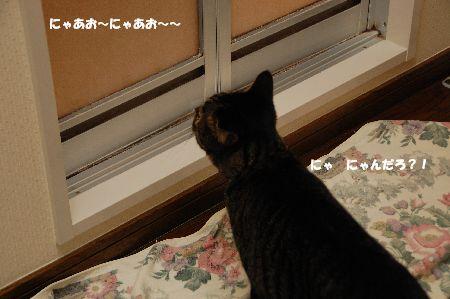 20100710kotetsu.jpg