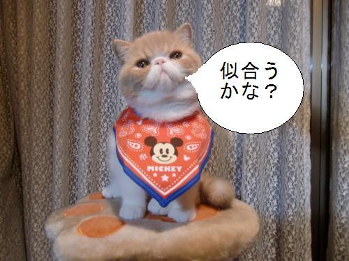 繧オ繧ケ繧ア+1769_convert_20101029195926