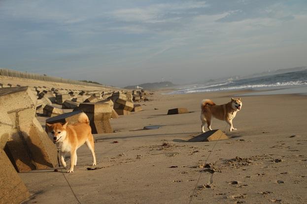 4砂浜散歩