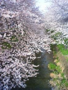 原田さとみ オフィシャルブログ「SATOMI'S BLOG」-201004061535001.jpg