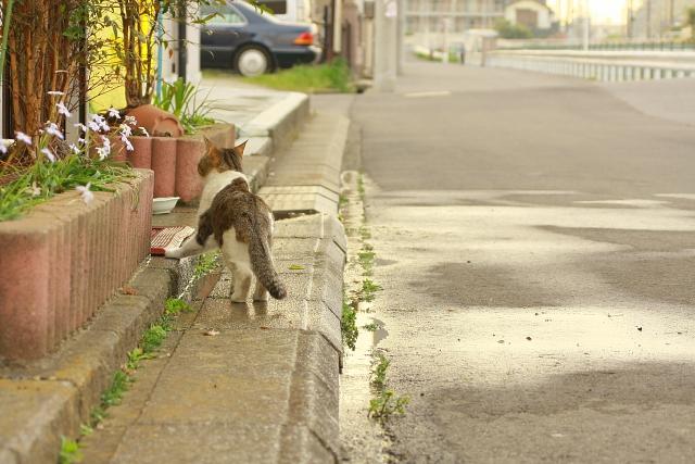 100710-cat03.jpg