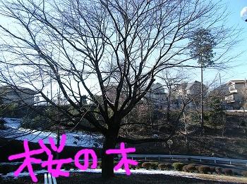 DSCF8236.jpg
