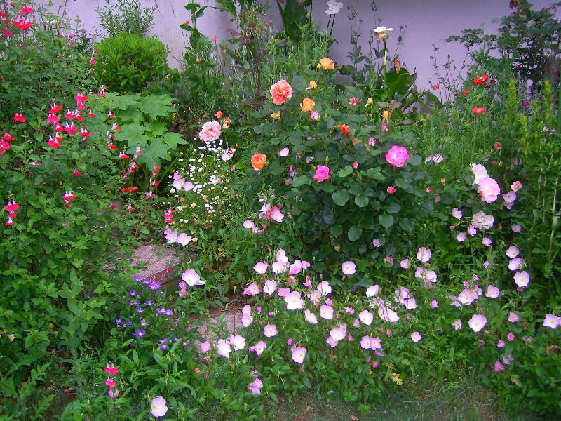 2009.5.22 02初夏の庭