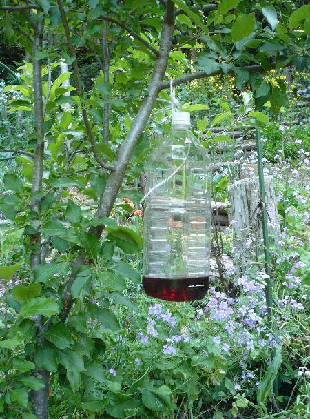 スズメバチトラップを日陰の木に