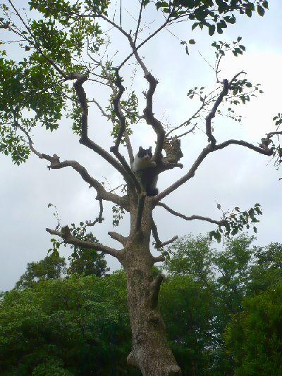 木に登ってうひょうひょしている、りいのすけ