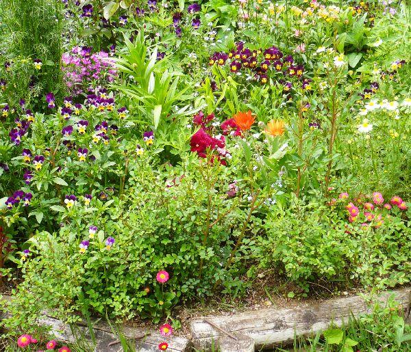 5月7日の庭