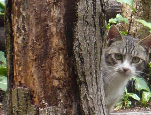 グレコの兄弟のコトラ