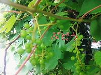007_20110620102439.jpg