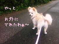 015_20110620102441.jpg